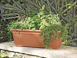 how to grow edibles in window boxes