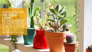 House Plant Indirect Light The Right Light For Succulents Outside Indoors Sunlight And Grow Lights