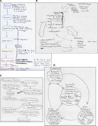 Example Pre And Post Scientific Process Flowchart