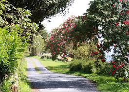 309 Best ArtEnglish Cottages U0026 Gardens Images On Pinterest Romantic Cottage Gardens