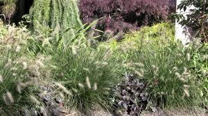 Small Picture Ornamental Grass Garden Design YouTube