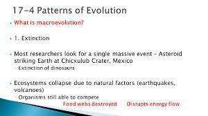Section 174 Patterns Of Evolution