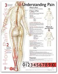 Understanding The Spine Chart Wall Chart 9781930633766