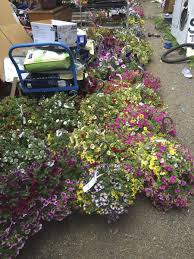 fred meyer garden center. Interesting Fred Vancouver Police Have Jailed A 41yearold Man After More Than 6000 In Inside Fred Meyer Garden Center A