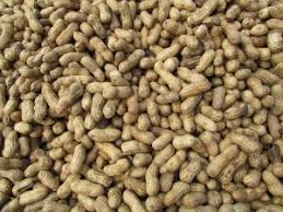 A Cure for Peanut Allergies? | National Center for Health Research
