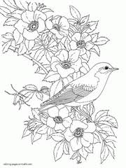 Birds of india coloring page. 34 Bird Coloring Pages For Adults Free