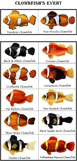 Clown Fish Identification Chart Clown Fish Aquarium Fish Reef Aquarium Marine Fish
