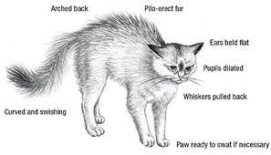 Cat Body Language Chart Aspca Feline Ality Cat Body Postures Pet Boarding