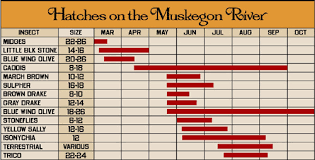 Pere Marquette River Hatch Chart Muskegon River Report Guide Fishing Salmon Steelhead Trout