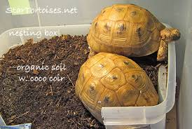 substrates for indoor tortoise enclosures