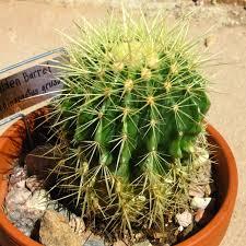 Randys Plants