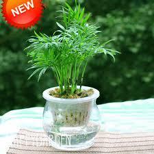 Hot Sale <b>5 Pcs/Pack Bowl lotus</b> Bonsai Hydroponic Plants Aquatic ...