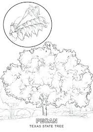 Tree Printable Coloring Page State Tree Coloring Page State Tree