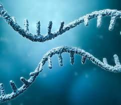 mRNA | GEN - Genetic Engineering and Biotechnology News