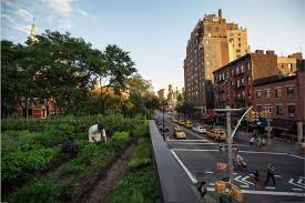 suarez drew inspiration from brooklyn grange to design the 1 000 square foot rooftop garden
