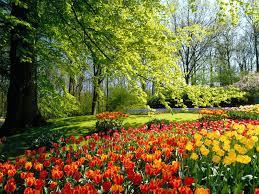 Image result for spring images
