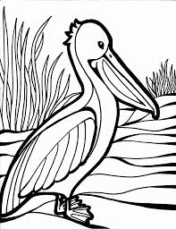 Small Picture Bird coloring pages pelican ColoringStar