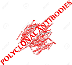 polyclonal antibodies abstract word cloud for polyclonal antibodies with related tags