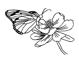 Small Picture FREE Butterfly Coloring Pages Butterfly Visiting Flower