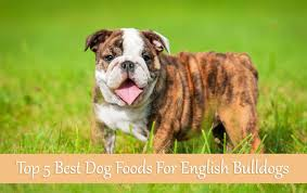 Bulldog Puppy Feeding Chart Top 5 Best Dog Foods For English Bulldogs Buyers Guide 2017