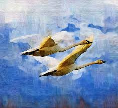 swan painting tundra swans in flight by clarence alford