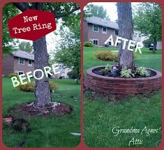 landscaping around oak tree roots round designs