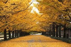 「国営昭和記念公園 画像 無料」の画像検索結果