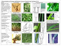 Identify Your Pasture Grasses On Pasture