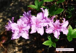 봄 아지랑이에 대한 이미지 검색결과