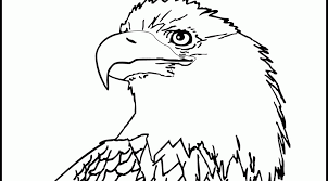 Small Picture Bald Eagle Coloring Pages Coloring Home