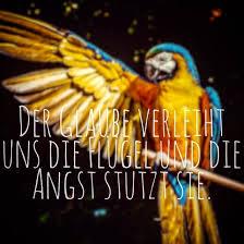 Glaube Fliegen Angst Jeder Menschen Vertrauen Nature Glü