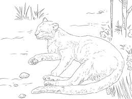 Small Picture Jaguarundi Sleeping In The Ground Coloring Page Animal Free