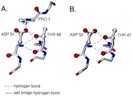 Hydrogen Bonding Hydrogen Bonding At A Conserved Threonine In Lentivirus