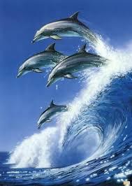 اروع الدلافين images?q=tbn:ANd9GcS