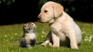 Nature Cats Animals Dogs Desktop ...