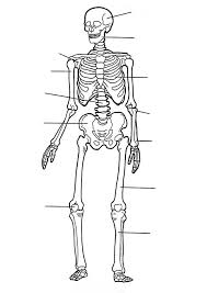 coloring page Human body - Human body Great for Anatomy Teachers ...