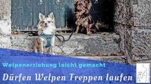 2010 s.u.) wird gezeigt, dass bei hunden das hüftgelenk beim treppensteigen nicht mehr in anspruch genommen wird. Durfen Welpen Treppen Laufen Welpenerziehung Mein Lieber Hund Youtube
