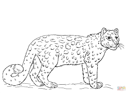 Small Picture Snow Leopard coloring page Free Printable Coloring Pages