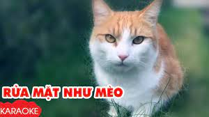 Rửa Mặt Như Mèo - Karaoke | Nhạc Karaoke Thiếu Nhi Beat Chuẩn Dành Cho Bé -  YouTube