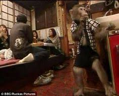 Image result for Fukuchan Monkey in wig, mask, works Restaurant!