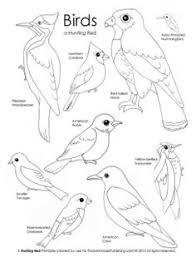 Small Picture Bird Beak Activity using various tools to act like bird beaks A