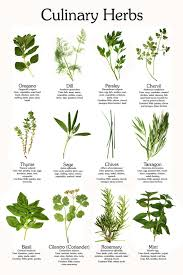 Small Picture Herbs Herbal Medicines Herb Garden CD 29 Books by Infocraft 499