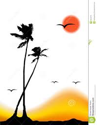 tropical sunset palm tree silhouette