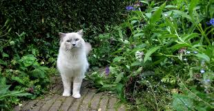 how to keep cats out of the garden. Keep Pets Of Your Own How To Cats Out The Garden O