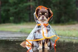 Image result for hurricane pets