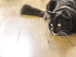Cat Stool Chart Why Do My Cats Stools Smell So Bad