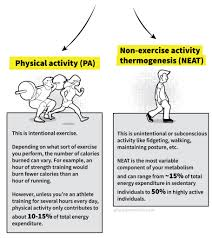 Activity Energy Expenditure Chart The Truth About Your Slow Metabolism Physiqonomics