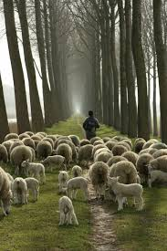 Image result for shepherd calling sheep