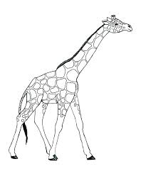 Coloring Pages Of A Giraffe Giraffe Coloring Page Free Coloring