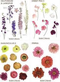 Flower Meanings Plants